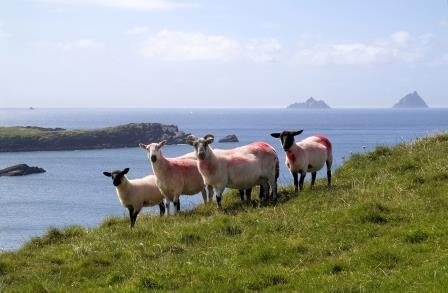 """Bilderreise an die Peripherie Europas: """"Unerwartete Impressionen"""" – Irlands äußerster Westen"""