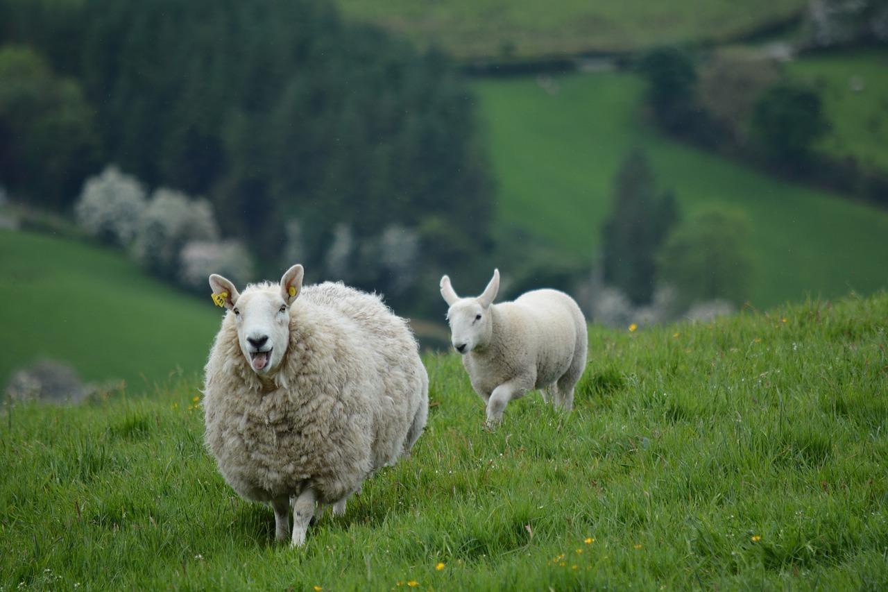 Dritte Studienreise nach Irland: Informationen für Teilnehmende